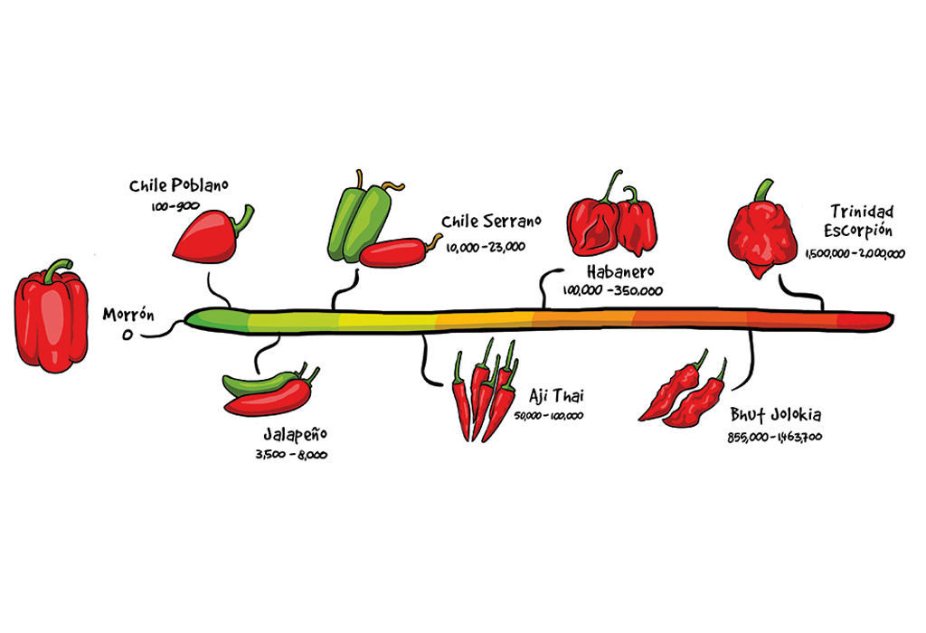 Chileglobe-escala-scovilles