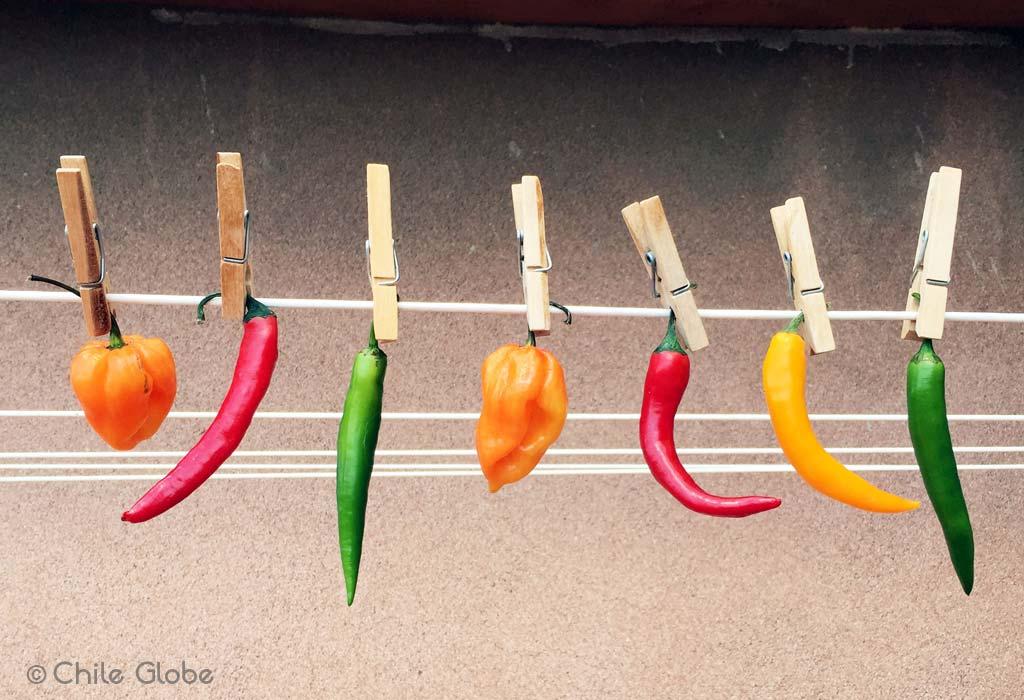 Chileglobe-chiles-sin-caducidad